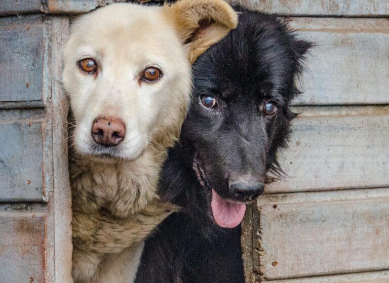 """Charla de la Corporación Mirada Animal Chile: """"Cambiando la cultura de nuestro país respecto a la adopción y la tenencia responsable"""""""